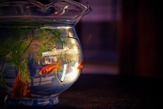 Fish_bowl2.jpg